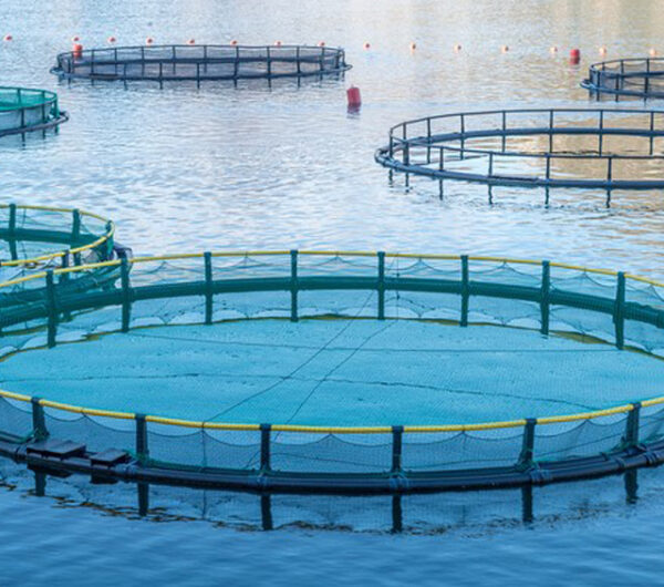 مشروع الزراعة المائية