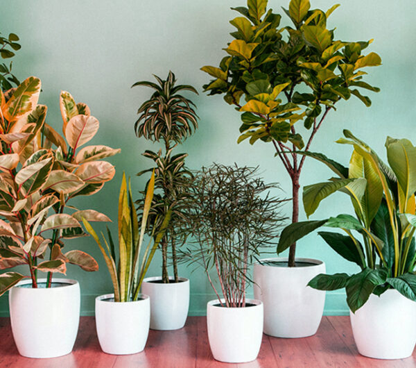 مشروع بيع النباتات المنزلية