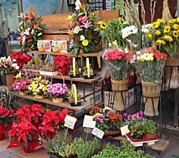 دراسة جدوى مشروع محل بيع الزهور