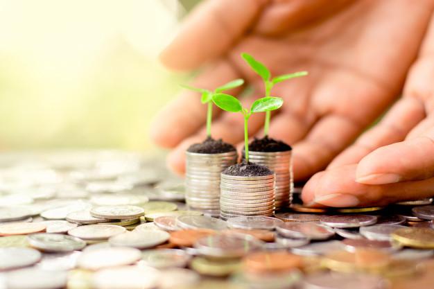 seedlings are grown on a coin 38663 25 - دور أفضل شركة دراسات جدوى في الرياض في تحديد جدوى المشروع؟