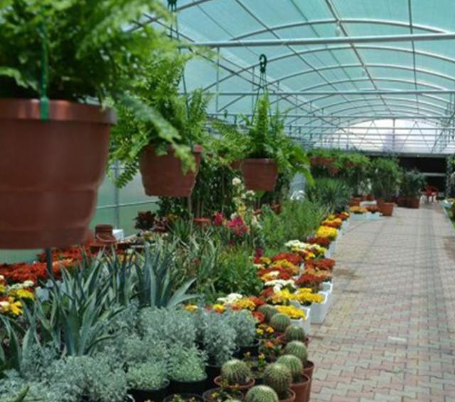 دراسة جدوى مشتل لبيع النباتات المنزلية
