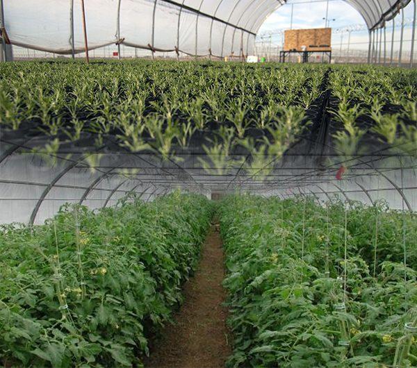 دراسة جدوى مشروع الصوب الزراعية باستثمار 750 ألف دولار
