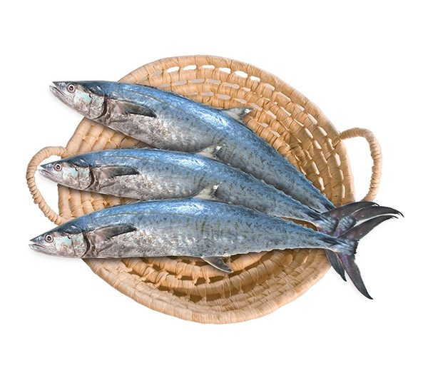 دراسة جدوىمشروع مصنع أسماك مجمدة باستثمار مليون و300ألف دولار