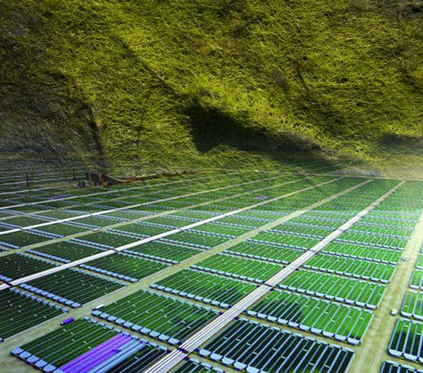 دراسة جدوى مشروع استزراع الطحالب باستثمار 900 ألف دولار