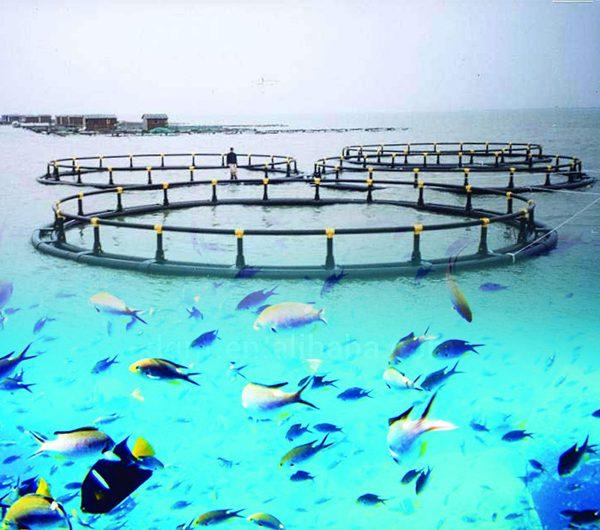 دراسة جدوى مِشروع الاستزراع المائي بنظام الأقفاص العائمة وبنظام الأكوابونيكباستثمار 2مليون و500 ألف