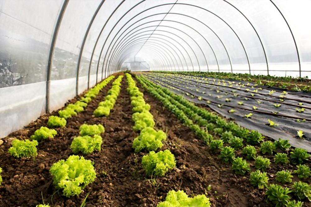 البيوت المحمية الزراعية في السعودية