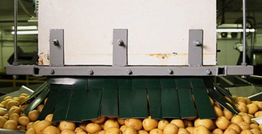 دراسة جدوى مصنع البطاطس