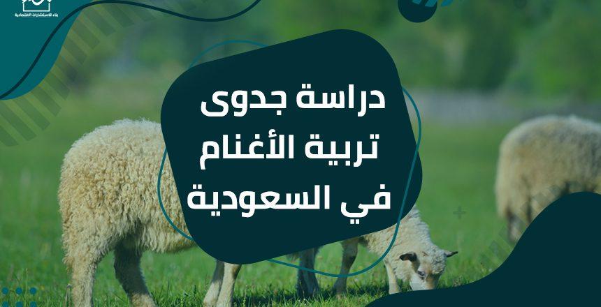 دراسة جدوى تربية الأغنام في السعودية
