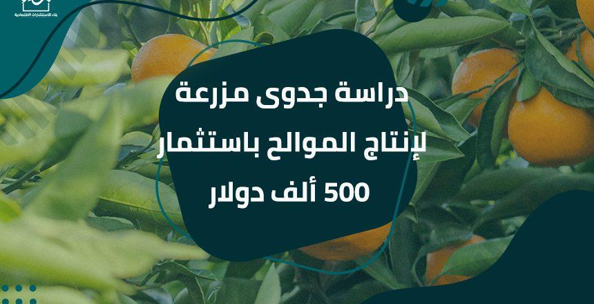 دراسة جدوى مزرعة لإنتاج الموالح باستثمار 500 ألف دولار