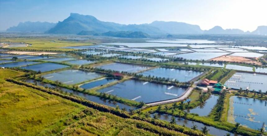 الاستزراع المائي