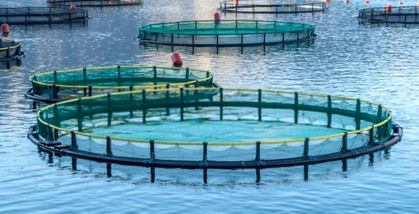 مشروع الاستزراع السمكي في الأقفاص