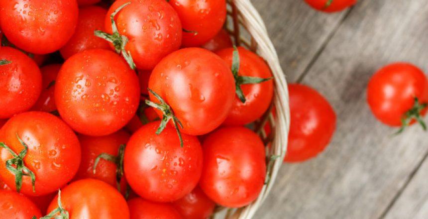 دراسة جدوى مصنع طماطم